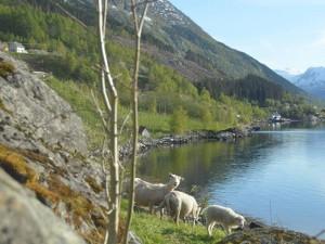 indre-bjotveit-fjorden